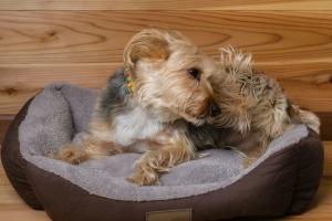Das flauschige Hundebettchen