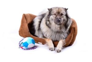 Hundekörbchen oder Hundecouch