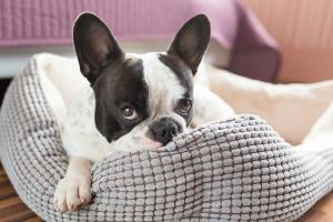 Hundebetten für den kleinen Hund