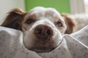 Wasserabweisende Hundesofas für ältere Hunde