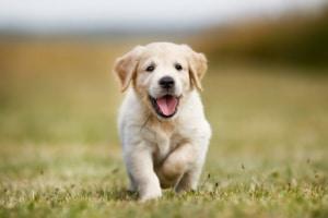 Wasserabweisende Hundesofas für Welpen