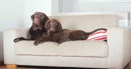 Welches Material wird für Hundesofas eingesetzt?