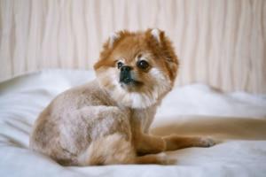 Warum ein Hundesofa?