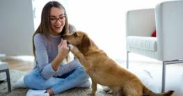 Welche Vorteile haben Hundesofas?